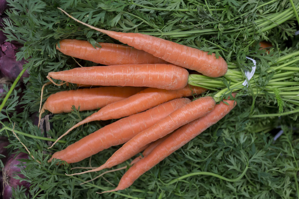Fruit And Vegetable Market Report November 2016 Carrots