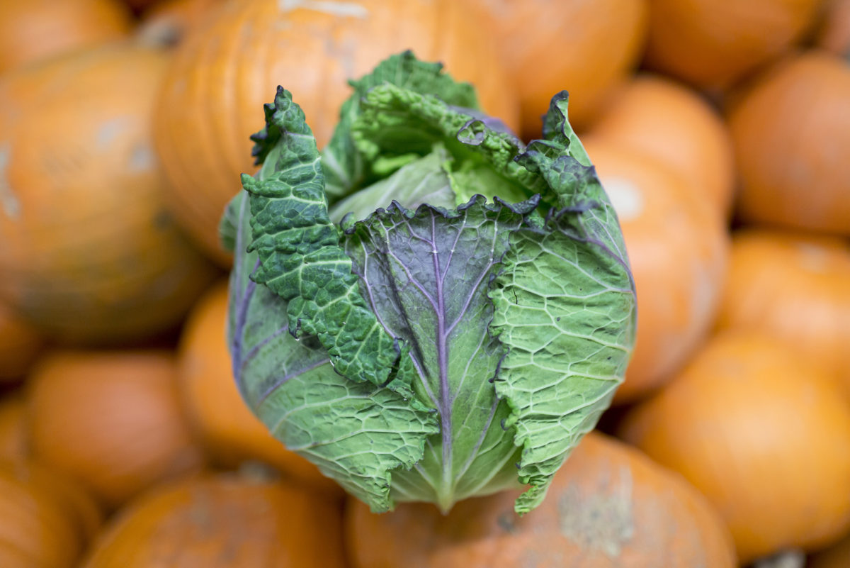 Fruit And Vegetable Market Report November 2016 January King Cabbage