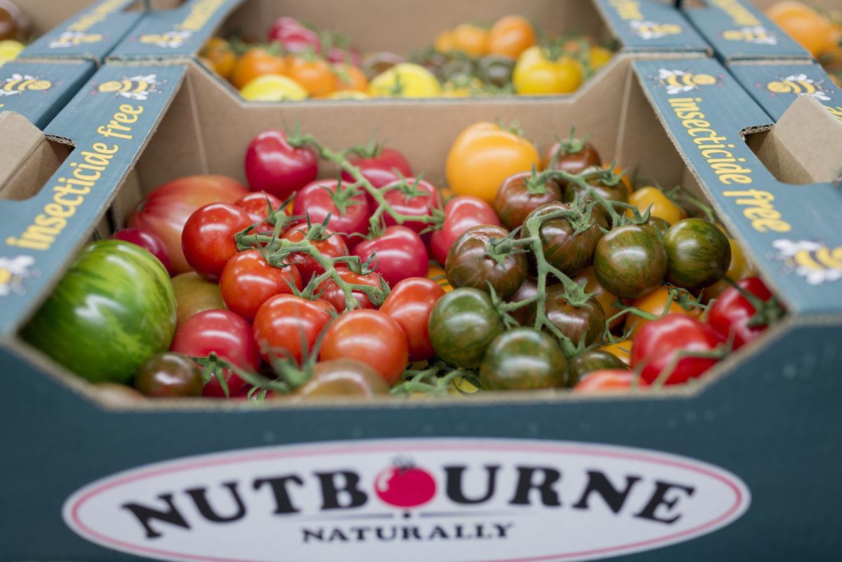 Fruit And Vegetable Market Report November 2016 Tomatoes