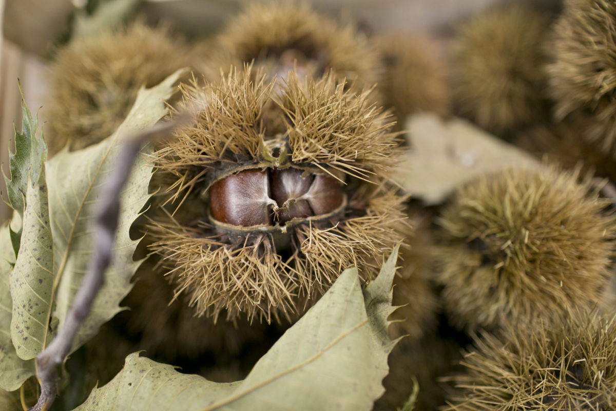Fruit And Vegetable Market Report October 2014 Chestnuts