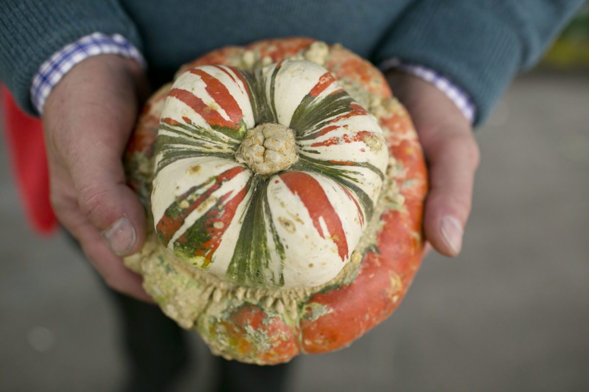 Fruit And Vegetable Market Report October 2014 Turks Turban Squash