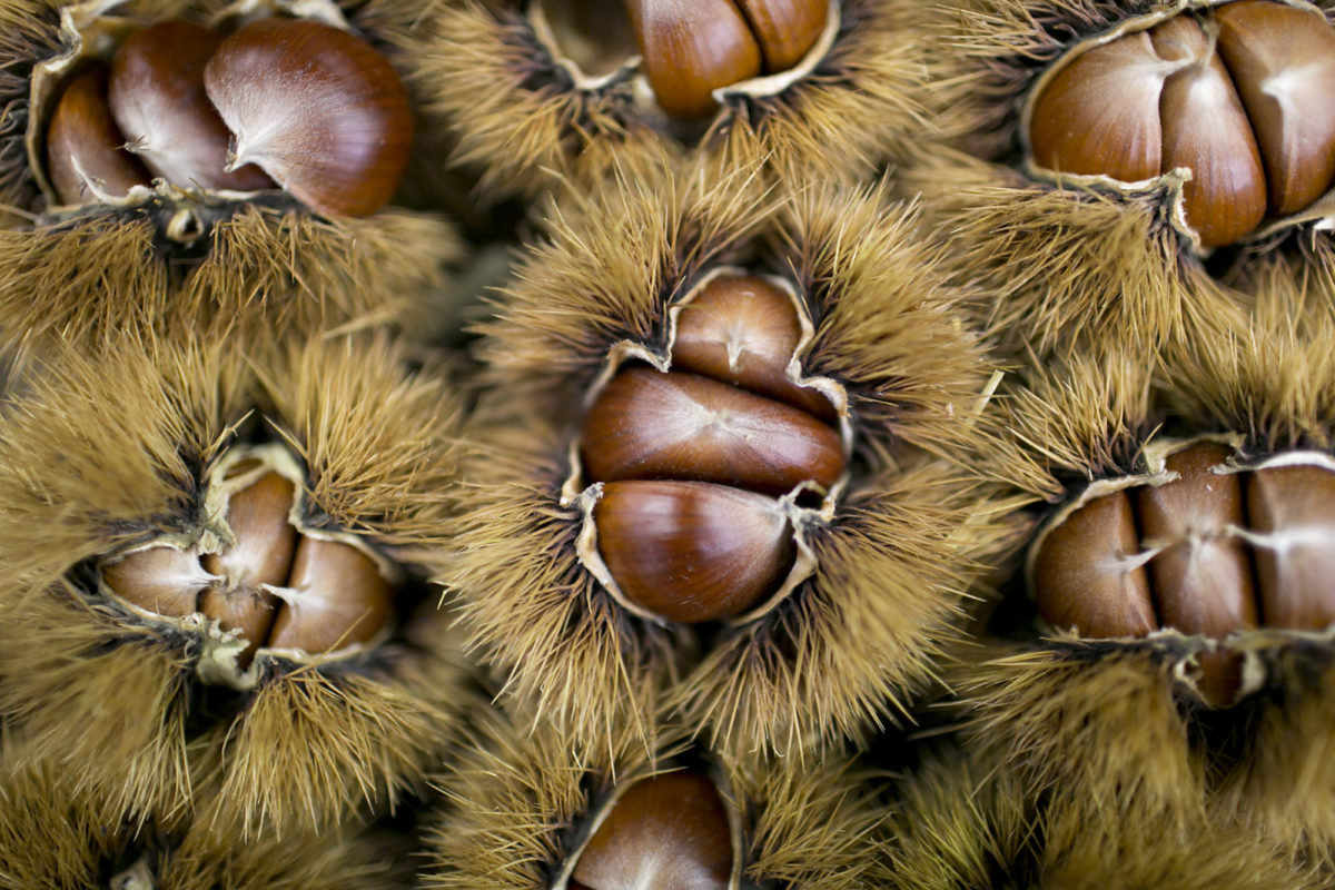 Fruit And Vegetable Market Report October 2015 Chestnuts