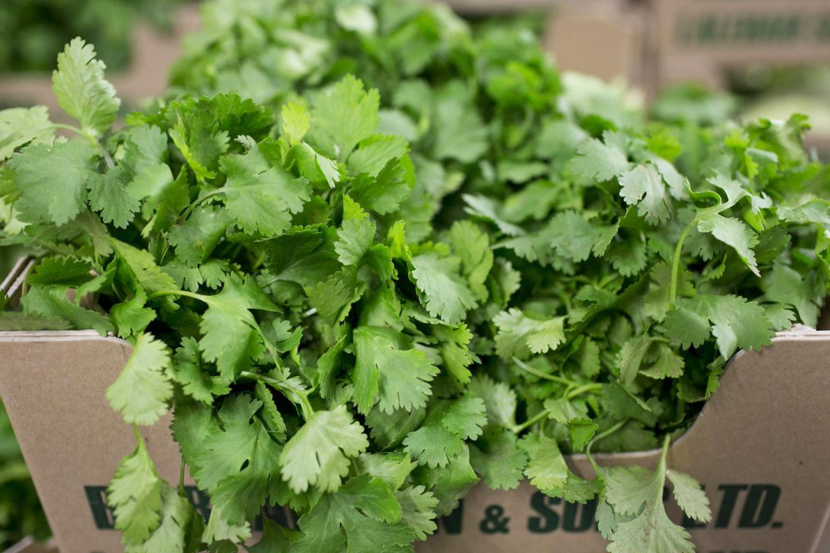 Fruit And Vegetable Market Report October 2015 Coriander