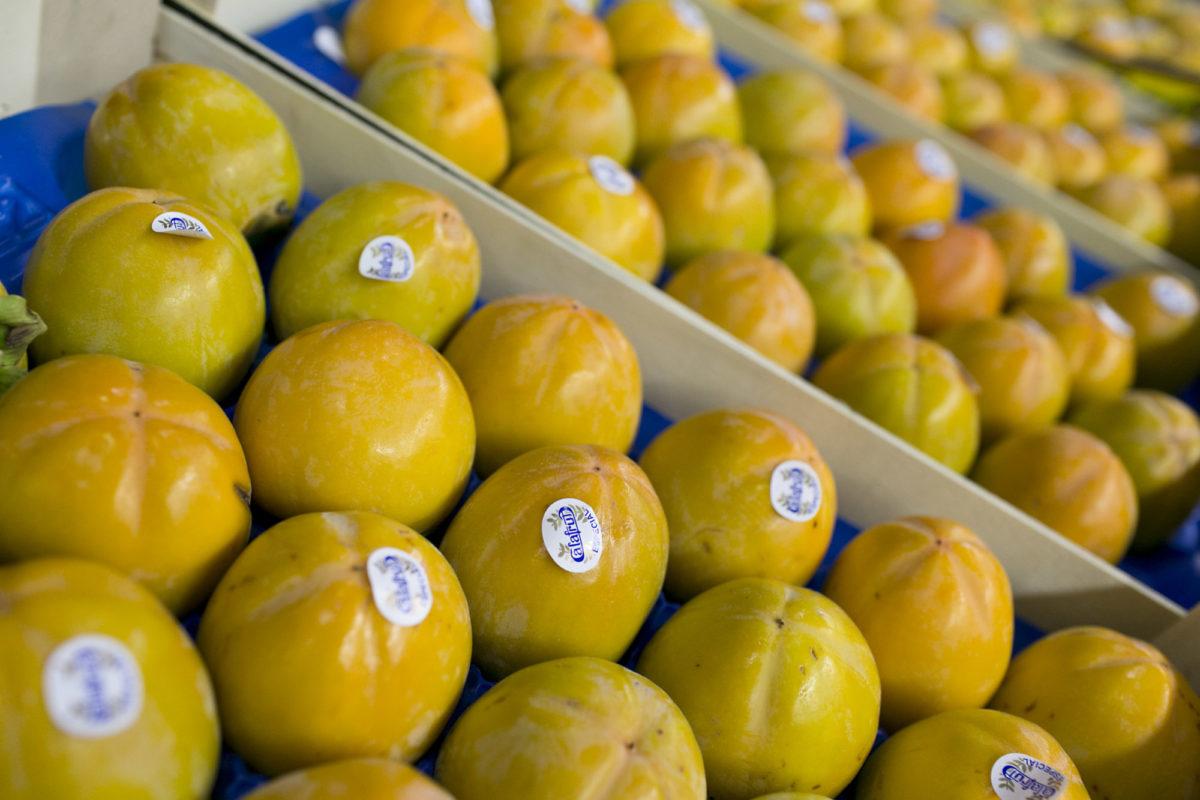 Fruit And Vegetable Market Report October 2015 Kaki Fruit