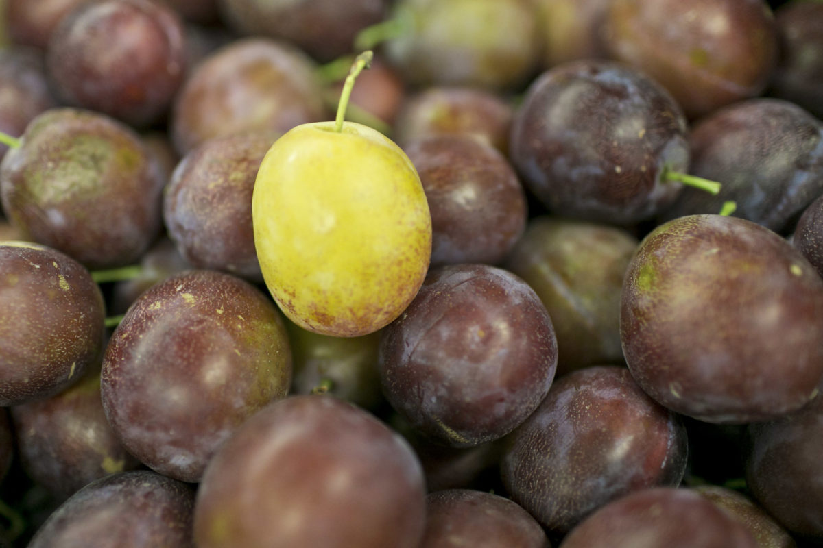 Fruit And Vegetable Market Report October 2015 Plums