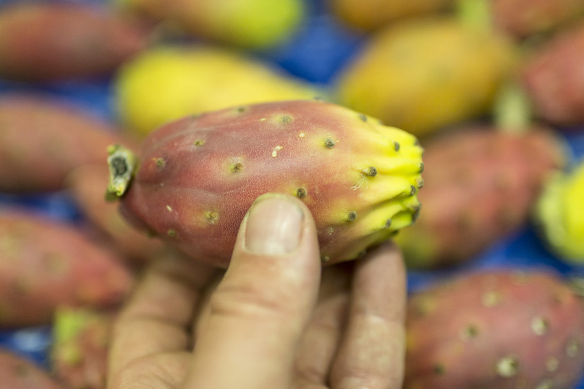 Fruit And Vegetable Market Report September 2016 Prickly Pears