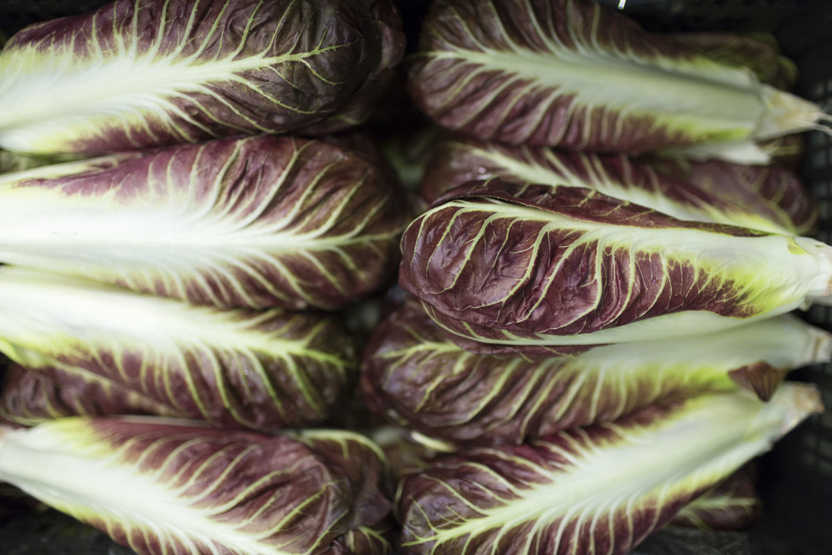 Fruit And Vegetable Market Report September 2016 Radicchio