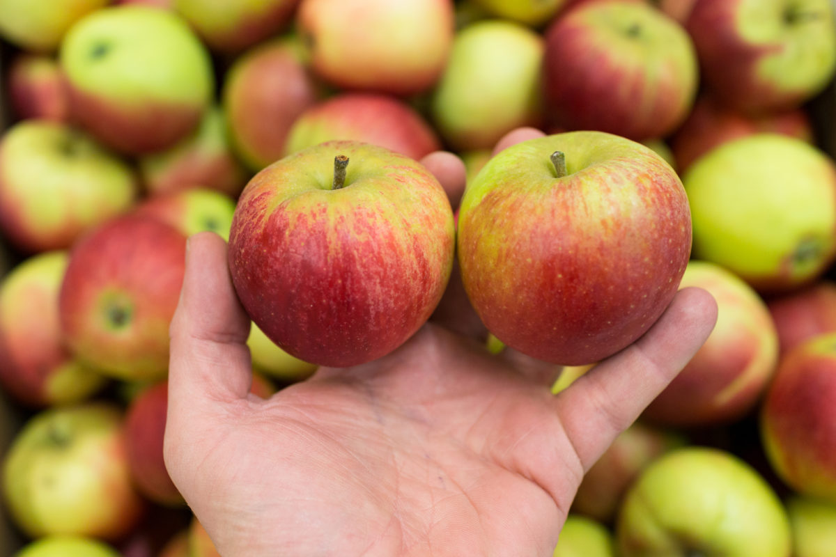 Fruit And Vegetable Market Report September 2017 English Apples