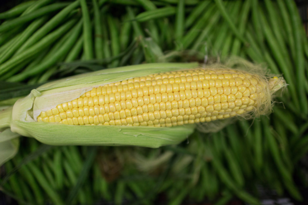 Fruit And Vegetable Market Report September 2017 Sweetcorn