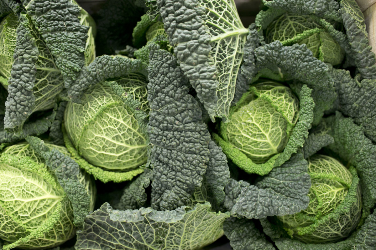 Fruit And Vegetables Market Report December 2015 Savoy Cabbage