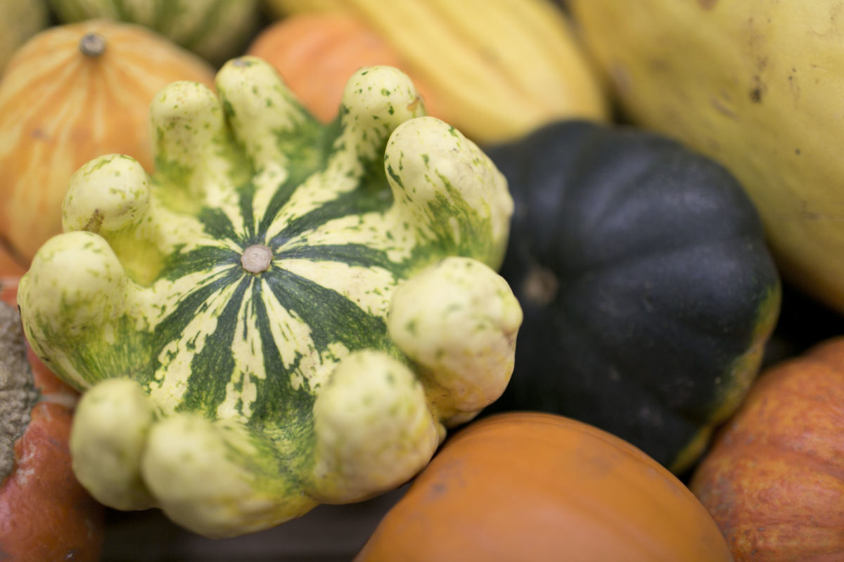 Fruit And Vegetables Market Report December 2015 Squashes