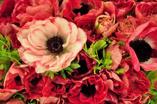 New-Covent-Garden-Flower-Market-November-Flowerona-1.jpg?mtime=20170928144545#asset:11915
