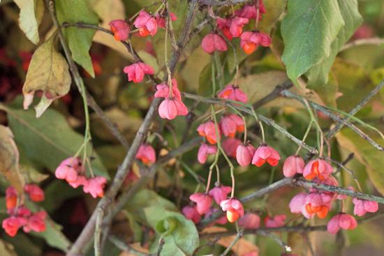 New-Covent-Garden-Flower-Market-November-Flowerona-17.jpg?mtime=20170928144556#asset:11931
