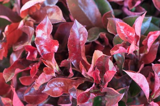 New-Covent-Garden-Flower-Market-November-Flowerona-19.jpg?mtime=20170928144557#asset:11933