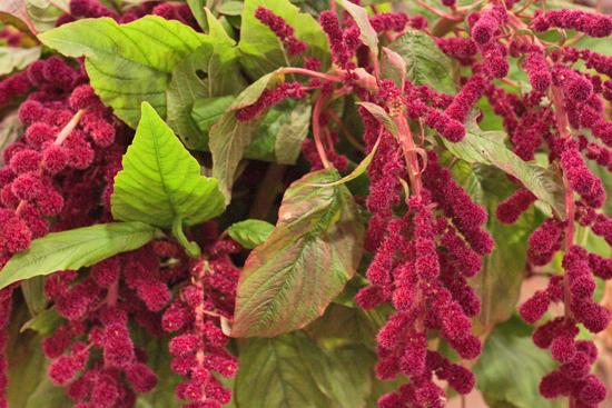New-Covent-Garden-Flower-Market-November-Flowerona-22.jpg?mtime=20170928144559#asset:11936