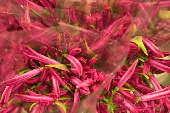 New-Covent-Garden-Flower-Market-November-Flowerona-23.jpg?mtime=20170928144600#asset:11937