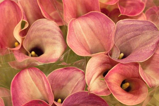 New-Covent-Garden-Flower-Market-November-Flowerona-24.jpg?mtime=20170928144601#asset:11938