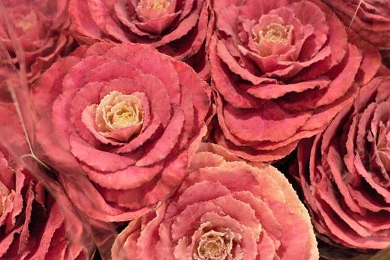 New-Covent-Garden-Flower-Market-November-Flowerona-25.jpg?mtime=20170928144601#asset:11939