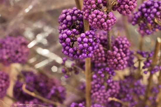 New-Covent-Garden-Flower-Market-November-Flowerona-30.jpg?mtime=20170928144605#asset:11944