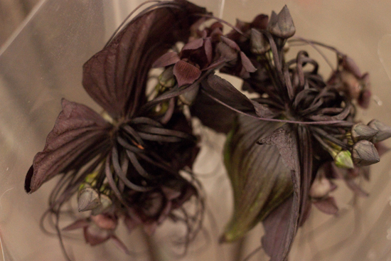 New-Covent-Garden-Flower-Market-November-Flowerona-31.jpg?mtime=20170928144605#asset:11945