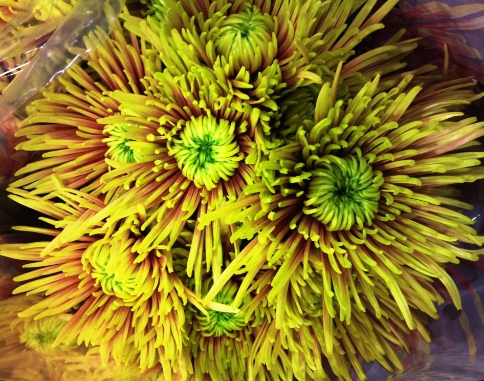 OCT-chrysanthemum.jpg?mtime=20171003171437#asset:12840