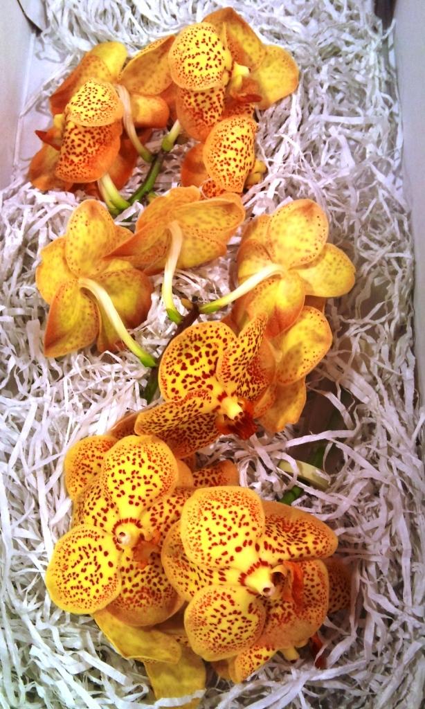 OCT-orchid.jpg?mtime=20171003171311#asset:12836