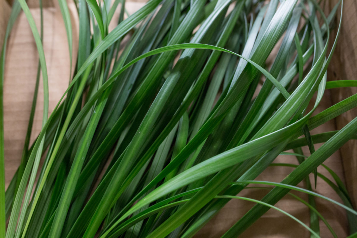 New Covent Garden Flower Market Product Profile Report August 2017 Grasses Rona Wheeldon Flowerona Lily Grass At Porters Foliage