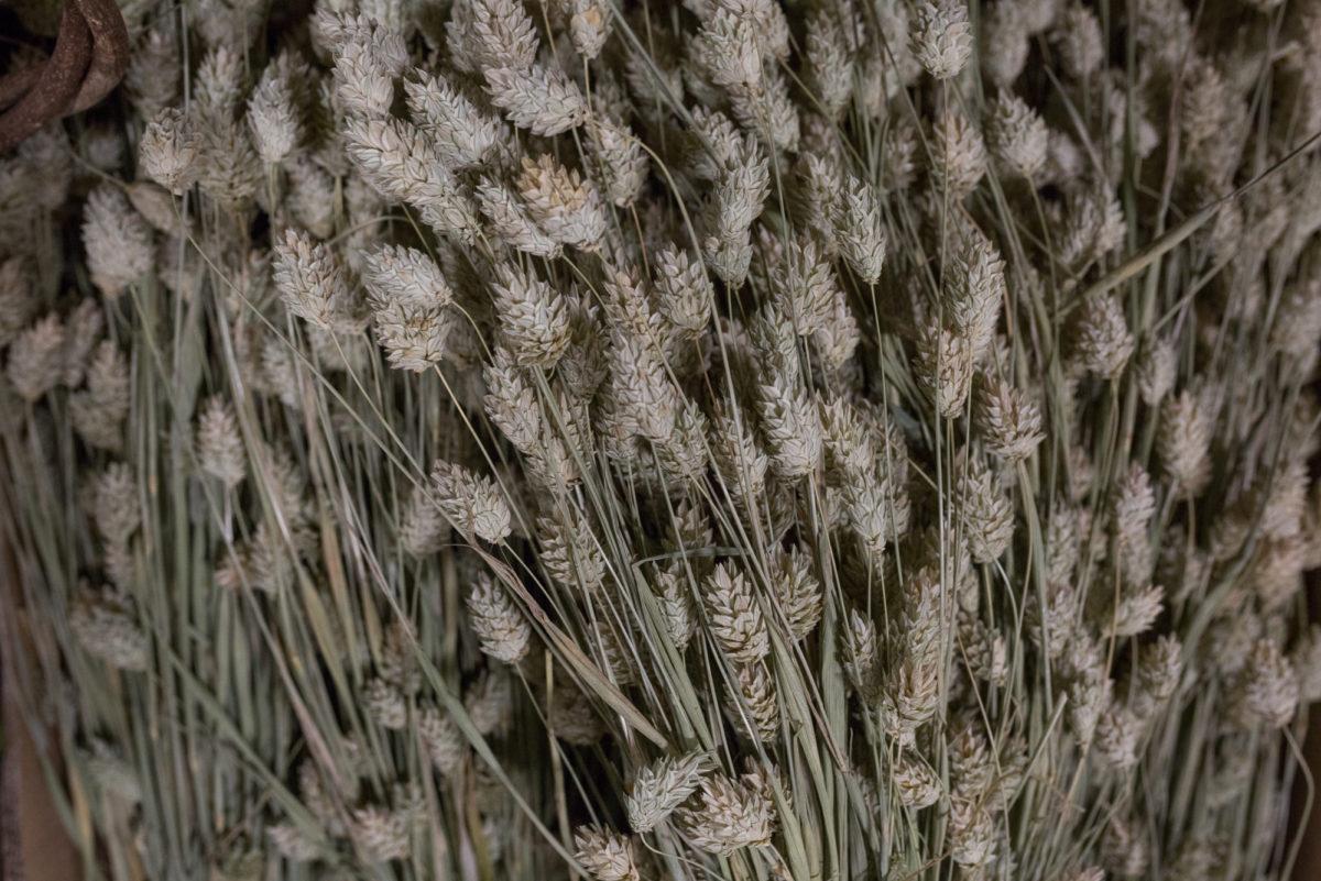 New Covent Garden Flower Market Product Profile Report August 2017 Grasses Rona Wheeldon Flowerona Phalaris At Porters Foliage