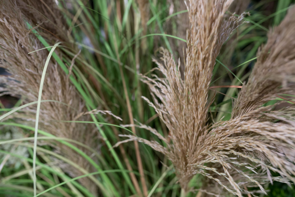 New Covent Garden Flower Market Product Profile Report August 2017 Grasses  Artificial Onion Grass With Reeds In A Pot At C Best