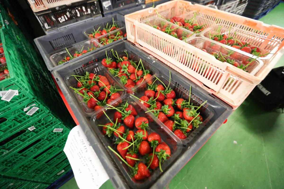 Fruit And Veg Grower Profile June 2017 Hugh Lowe Long Stalks
