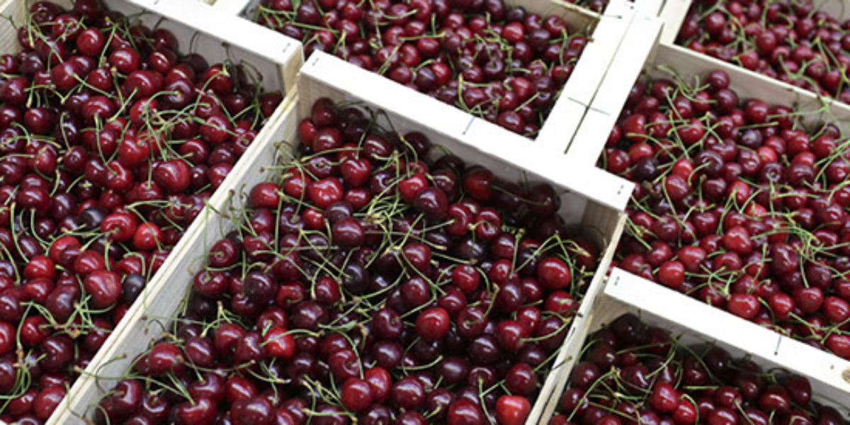Fruit And Veg Product Profile July 2017 English Cherries Pallet