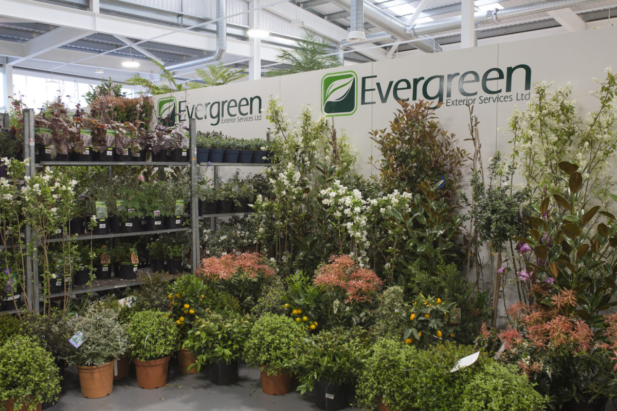 Brand New Flower Market At New Covent Garden Flower Market Rona Wheeldon Flowerona Evergreen