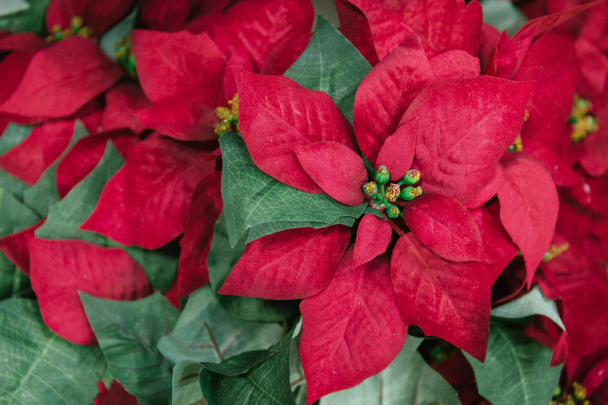 New Covent Garden Flower Market A Florists Guide To Christmas At The Flower Market Rona Wheeldon Flowerona Artificial Red Poinsettia At C Best November 2017