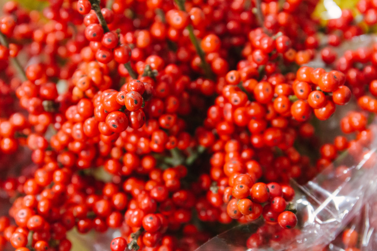 New Covent Garden Flower Market A Florists Guide To Christmas At The Flower Market Rona Wheeldon Flowerona Ilex Verticillata Red At Dennis Edwards Flowers November 2017 Hero