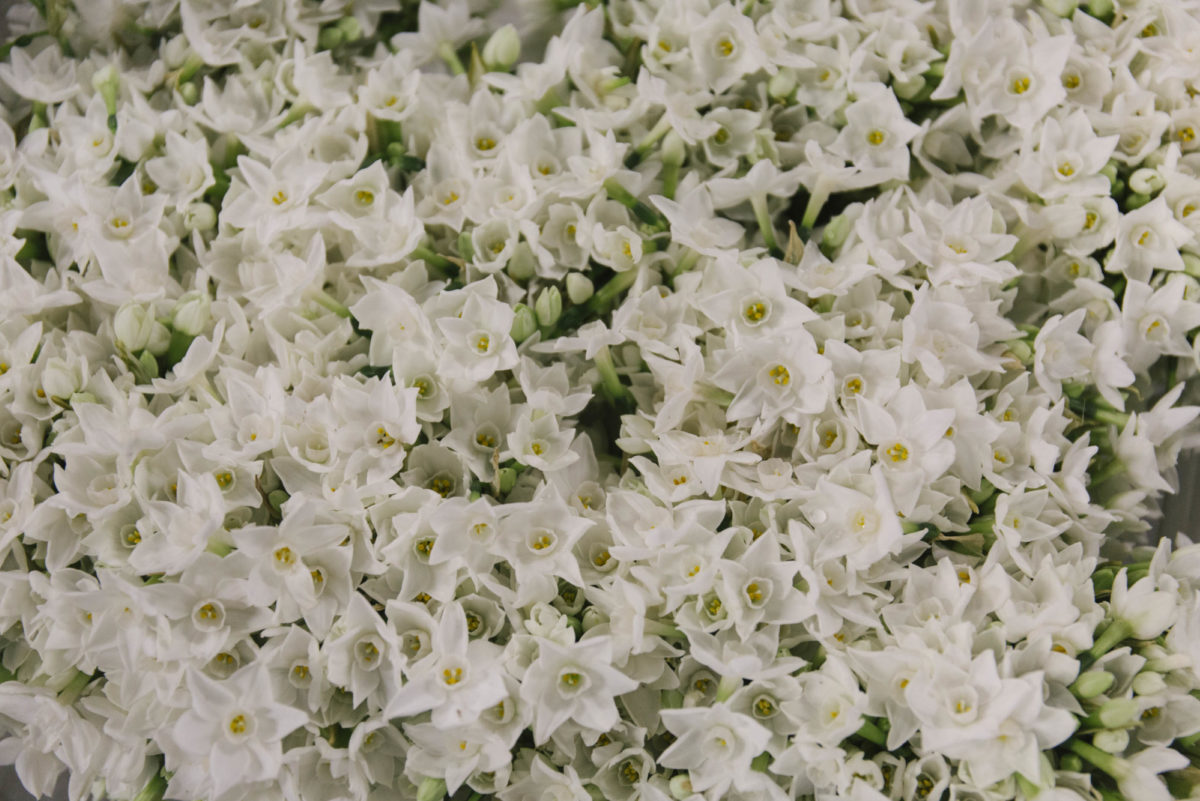 New Covent Garden Flower Market A Florists Guide To Christmas At The Flower Market Rona Wheeldon Flowerona November 2018 British Paper White Narcissi At Pratley