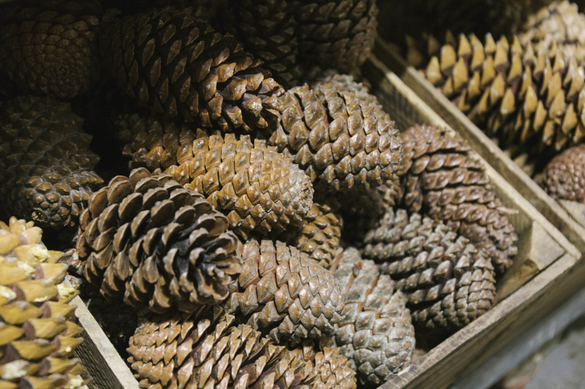 New Covent Garden Flower Market A Florists Guide To Christmas At The Flower Market Rona Wheeldon Flowerona November 2018 Natural Pine Cones At Porters Foliage