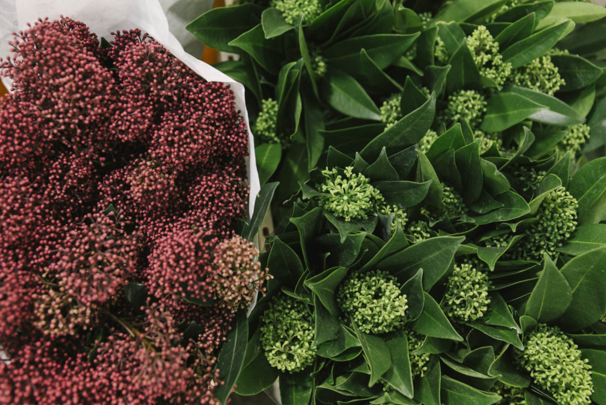 New Covent Garden Flower Market A Florists Guide To Christmas At The Flower Market Rona Wheeldon Flowerona November 2018 Red And Green Skimmia At Dg Wholesale Flowers