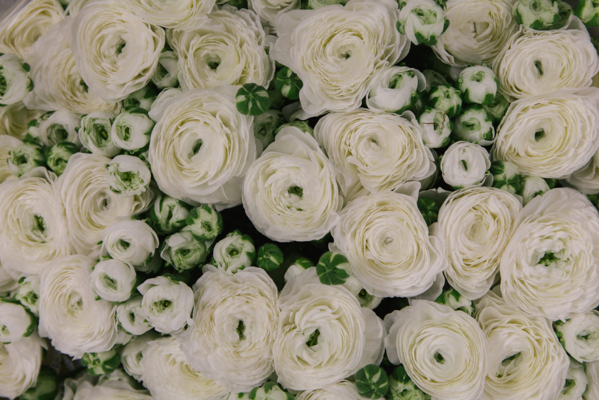 New Covent Garden Flower Market A Florists Guide To Christmas At The Flower Market Rona Wheeldon Flowerona White Cloni Ranunculus At Dennis Edwards Flowers November 2017