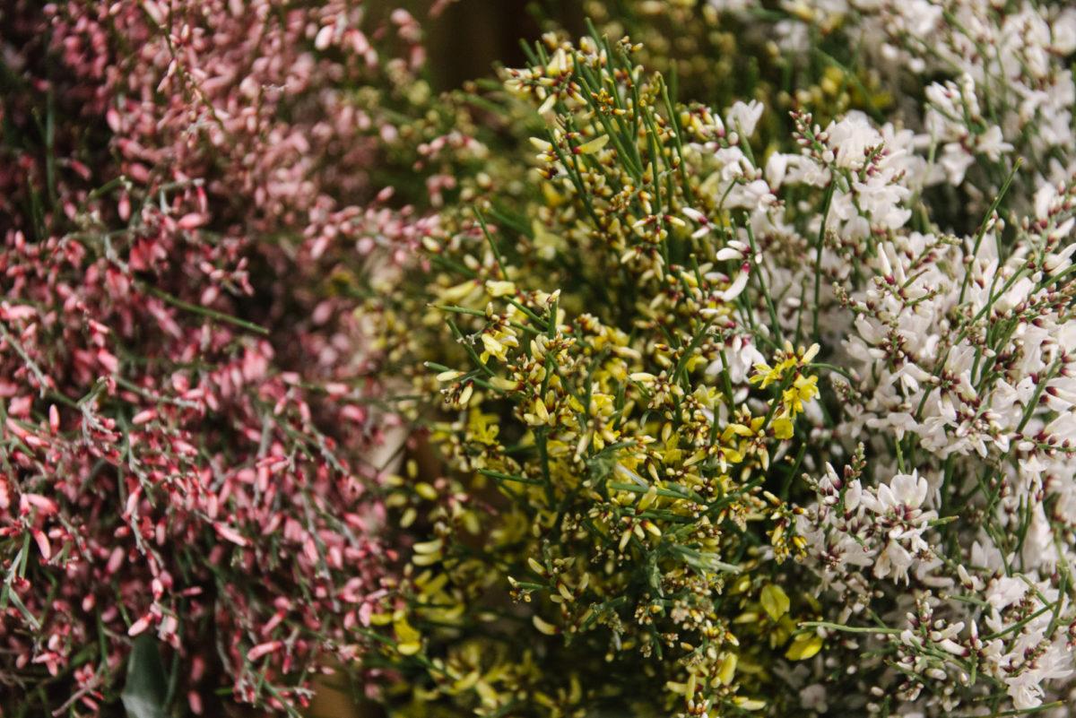 New Covent Garden Flower Market April 2018 In Season Report Rona Wheeldon Flowerona Genista Aka Broom At J H Hart Flowers
