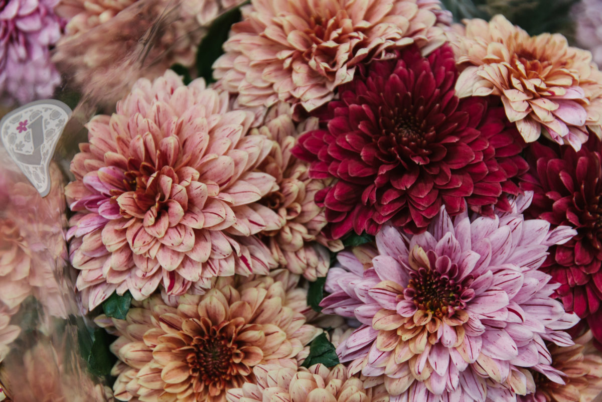 New Covent Garden Flower Market April 2018 In Season Report Rona Wheeldon Flowerona Mixed Varieties Of Chrysantheum Pip At The Floral Garden Group