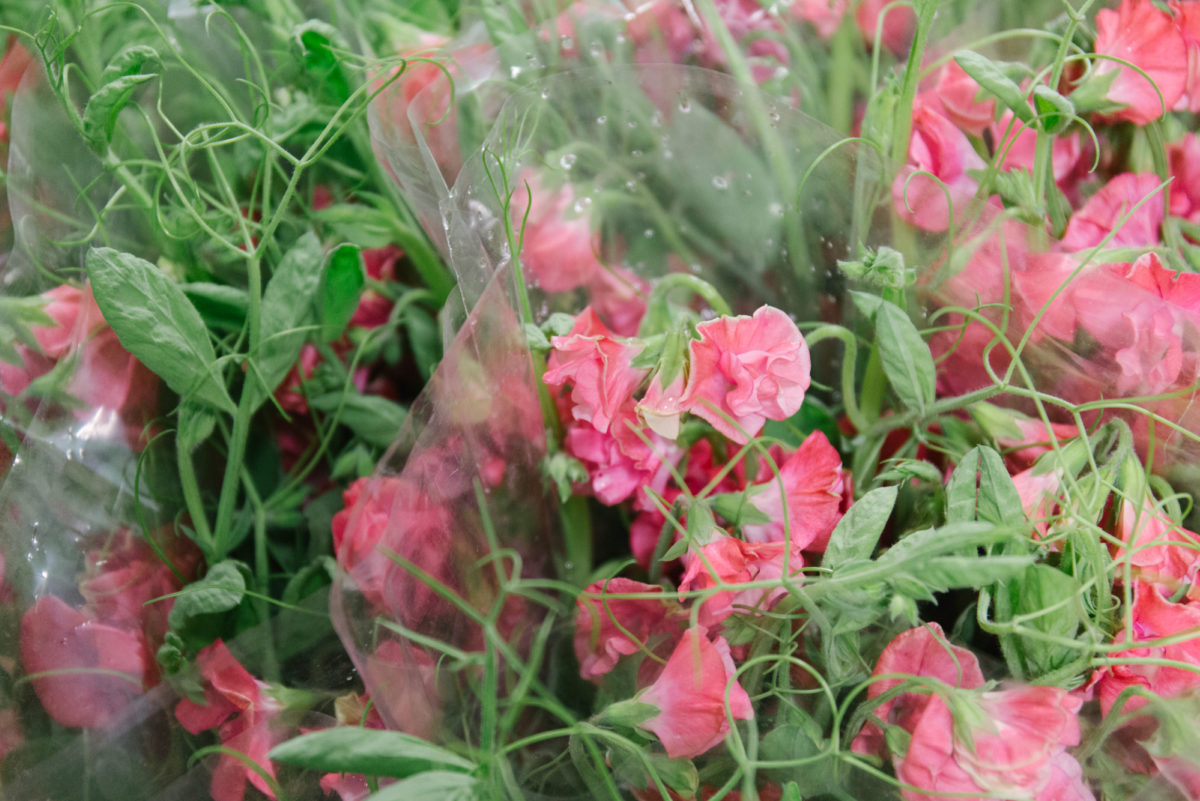 New Covent Garden Flower Market April 2018 In Season Report Rona Wheeldon Flowerona Pink Sweet Pea Vines At Dennis Edwards Flowers