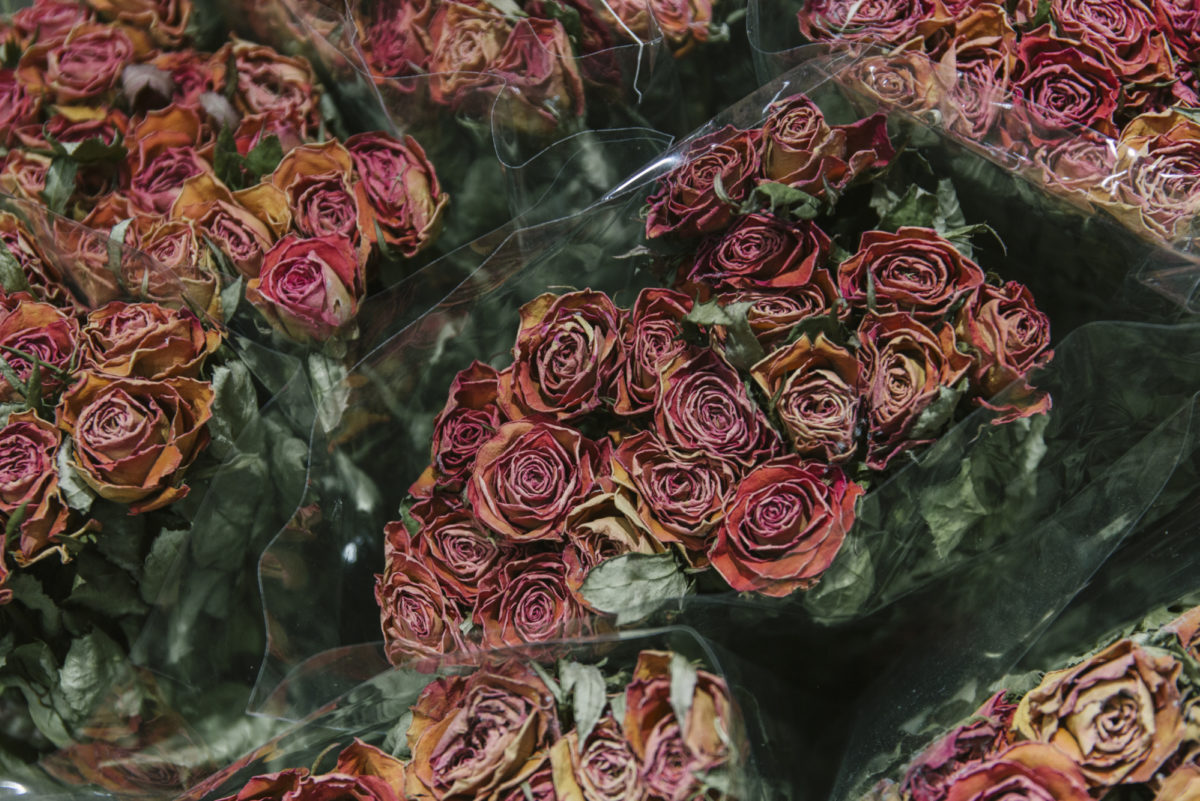 New Covent Garden Flower Market April 2019 A Florists Guide To Dried Flowers And Grasses Rona Wheeldon Flowerona Dried Pink Spray Roses At Porters Foliage