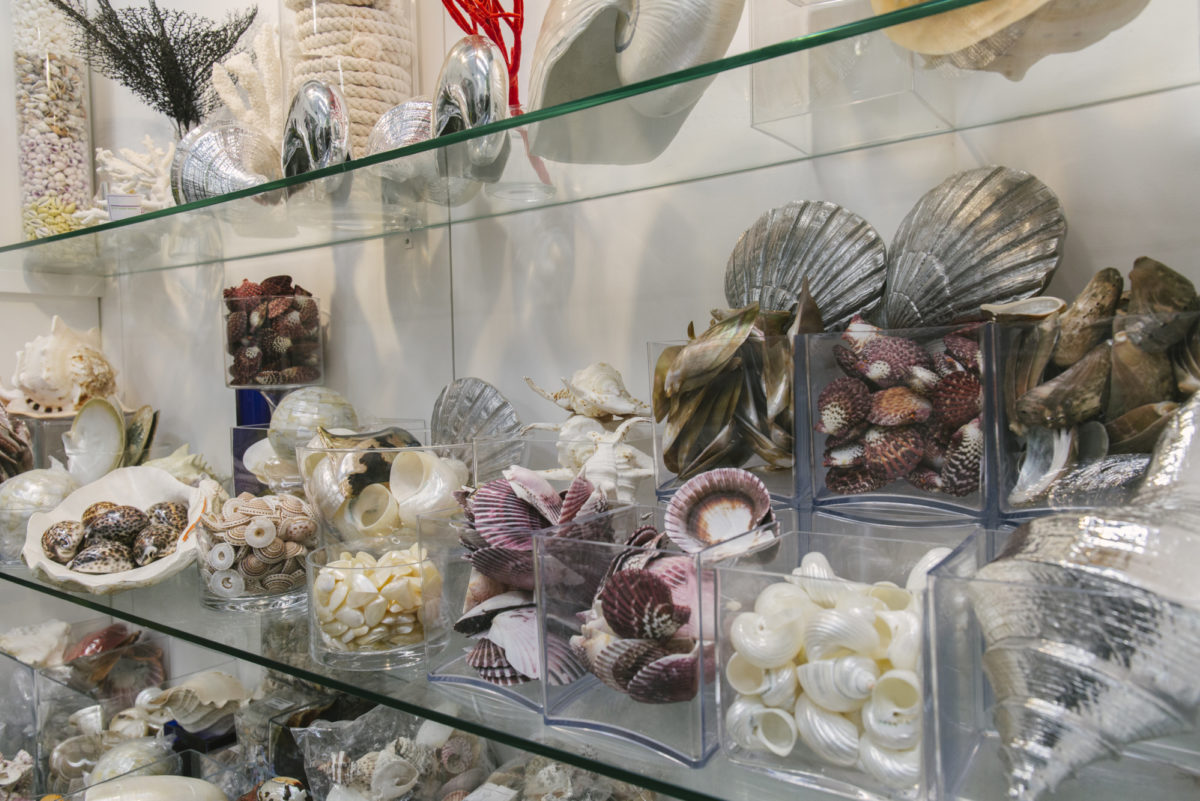 New Covent Garden Flower Market April 2019 In Season Report Rona Wheeldon Flowerona Wheeldon Flowerona Assorted Sea Shells At C Best