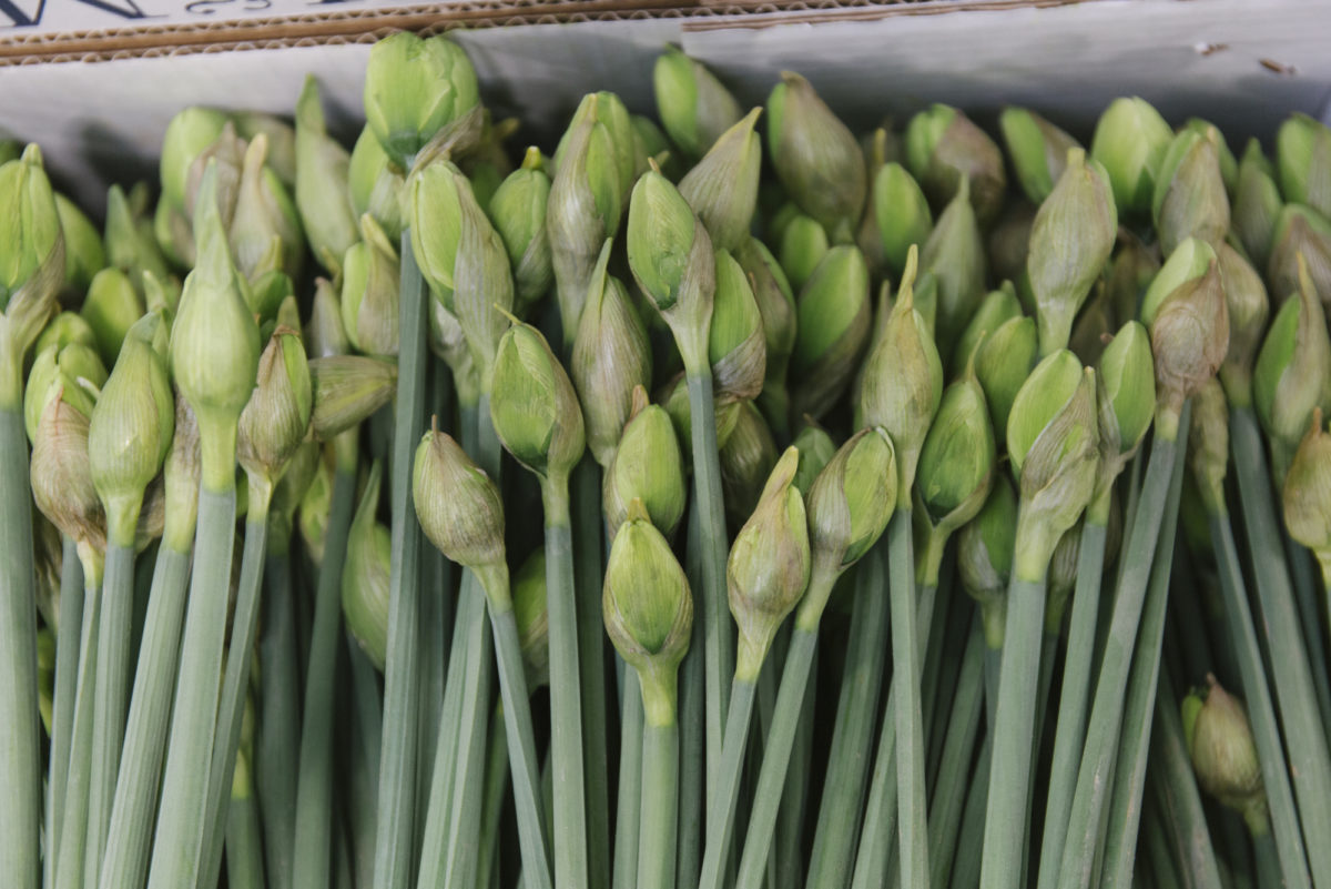 New Covent Garden Flower Market April 2019 In Season Report Rona Wheeldon Flowerona Wheeldon Flowerona British Narcissus Great Leap At Pratley