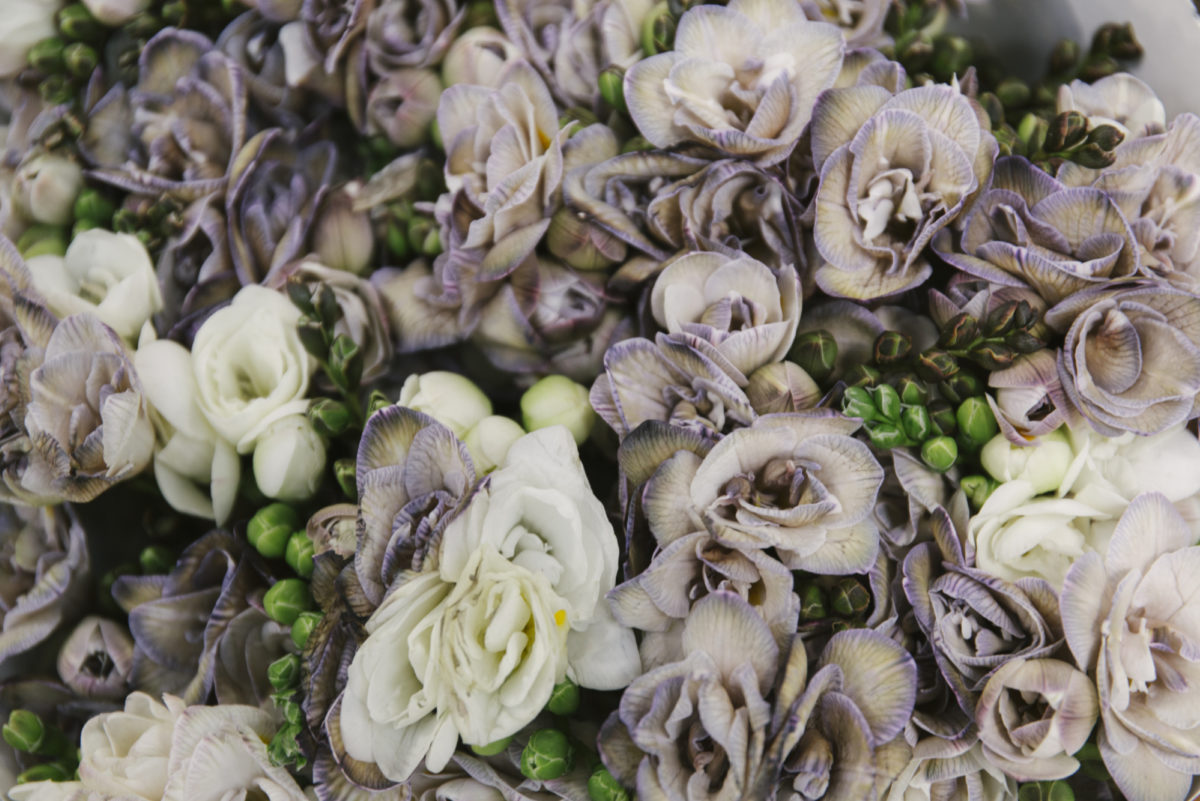 New Covent Garden Flower Market April 2019 In Season Report Rona Wheeldon Flowerona Wheeldon Flowerona Freesia Brownies At The Floral Garden Group