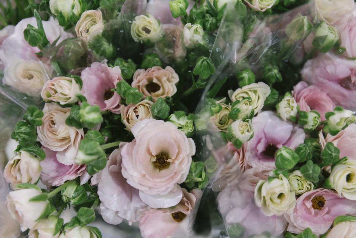 New Covent Garden Flower Market April 2019 In Season Report Rona Wheeldon Flowerona Wheeldon Flowerona Ranunculus Butterfly Ariadne At Bloomfield