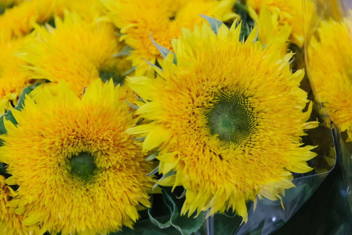 New Covent Garden Flower Market August 2018 In Season Report Rona Wheeldon Flowerona Teddy Bear Sunflowers At The Floral Garden Group
