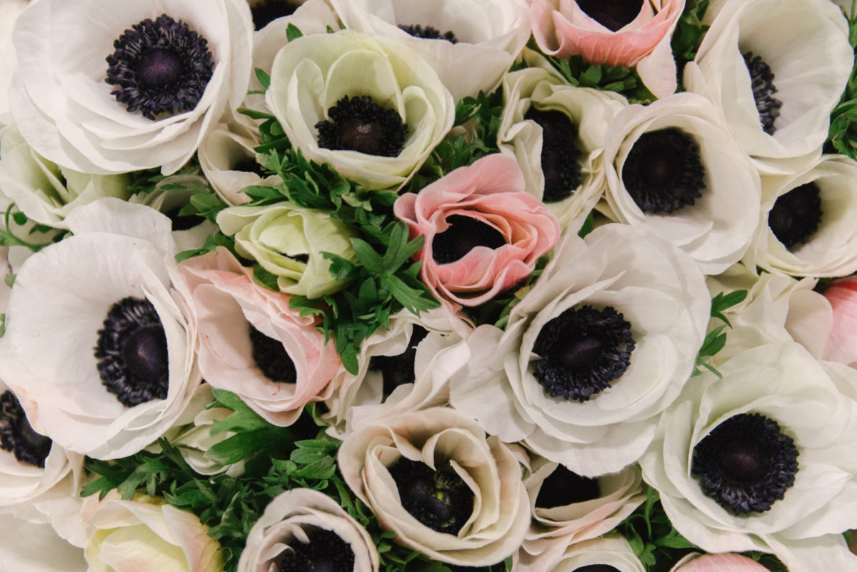 New Covent Garden Flower Market February 2018 In Season Report Rona Wheeldon Flowerona Anemones Mistral Super White At Bloomfield