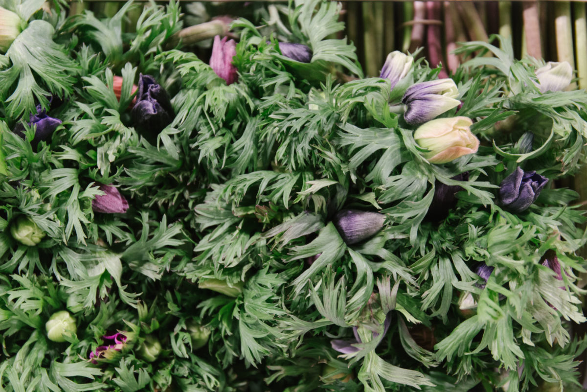 New Covent Garden Flower Market February 2018 In Season Report Rona Wheeldon Flowerona British Anemones At Pratley