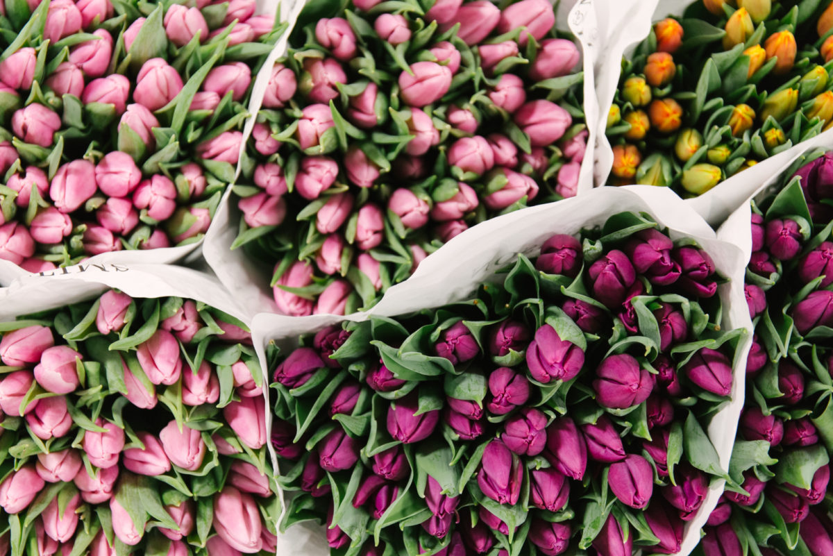 New Covent Garden Flower Market February 2018 In Season Report Rona Wheeldon Flowerona British Tulips At Pratley